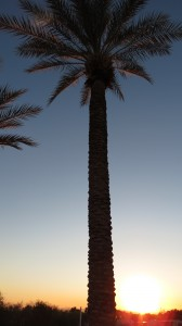 Palm Tree Against a Mesa, Sunset
